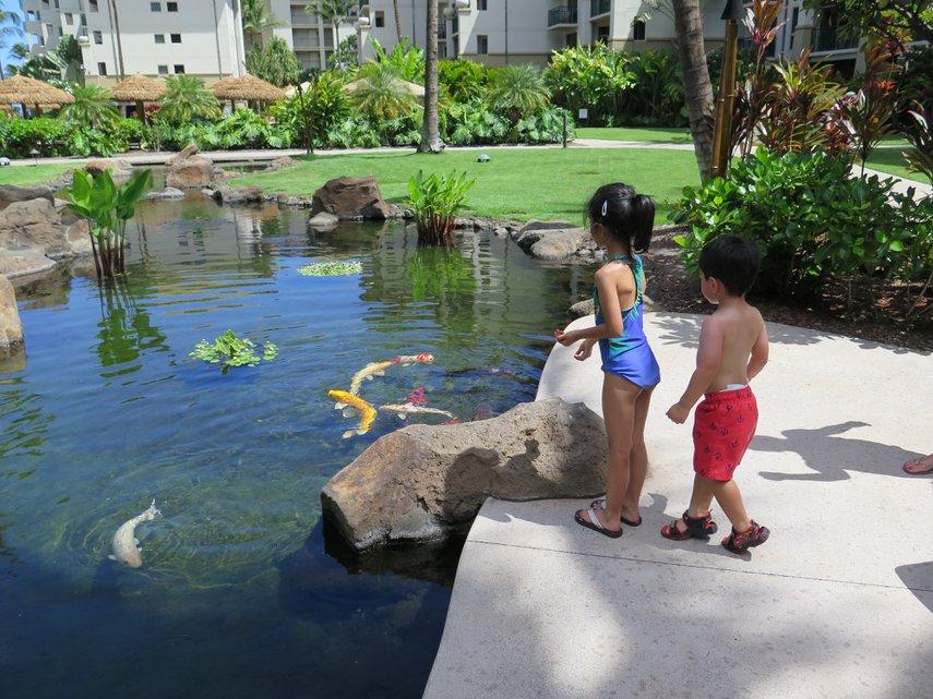 Feeding the Koi#VacationLife via @Vistana