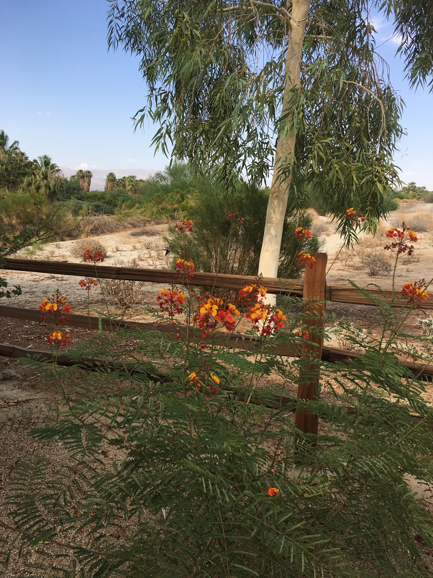 Hummingbird  at Desert Oasis#VacationLife via @Vistana