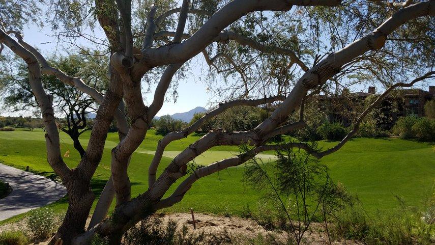 Westin Desert Willow Golf Course#VacationLife via @Vistana