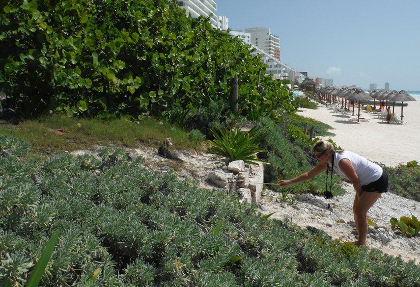 Feeding the iguanas that live in the Mayan ruins on the Cancun Lagunamar resort. #VacationLife via @Vistana