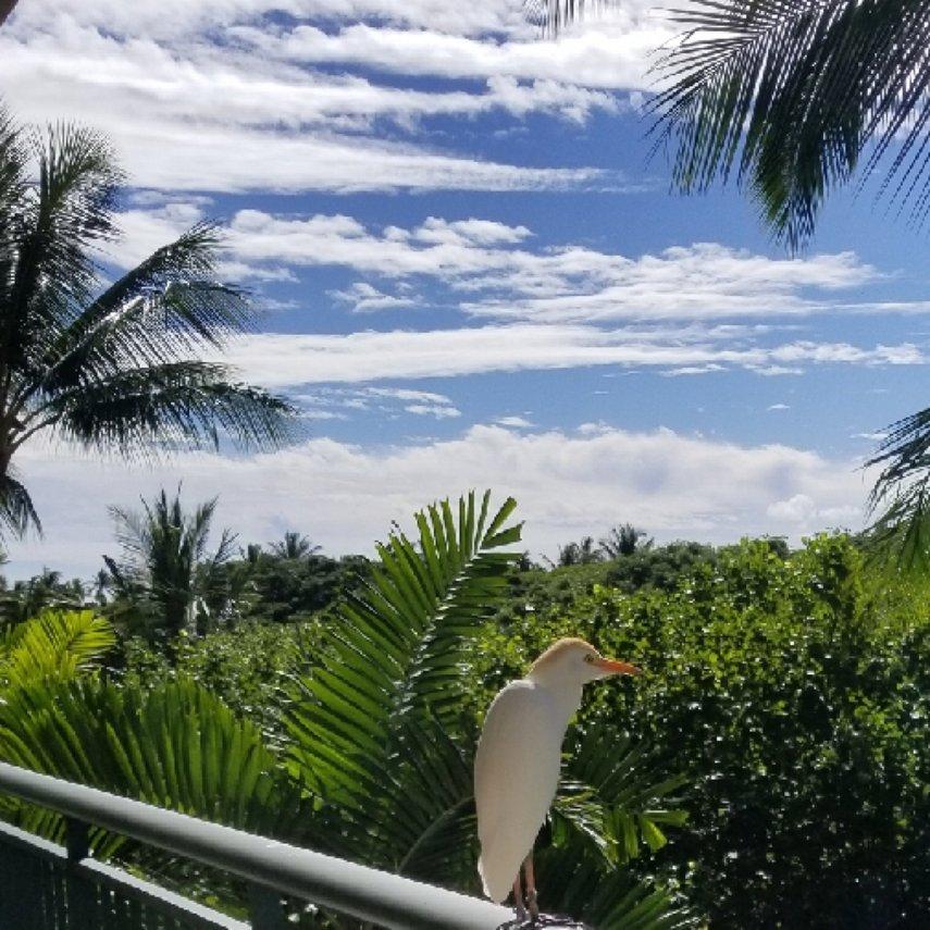 Any view's a great one at KOR villas!#VacationLife via @Vistana